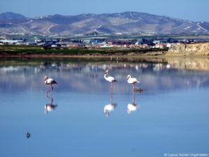 larnaca salt lake migratory birds